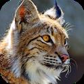 Bobcat Sounds icon