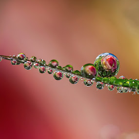 Crystal by Citra Hernadi - Abstract Water Drops & Splashes