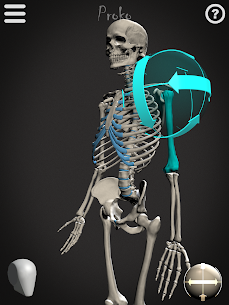 Skelly MOD (Cracked): Poseable Anatomy Model 7