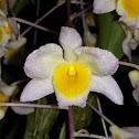Farmer's Dendrobium