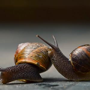 Snailes in love 2.jpg