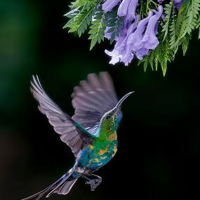 by Louis Groenewald - Animals Birds