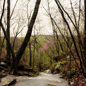 by Jamie Newton - Landscapes Waterscapes ( boston mountains, ozarks, water fall, spring )
