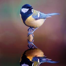 by Ad Spruijt - Animals Birds (  )