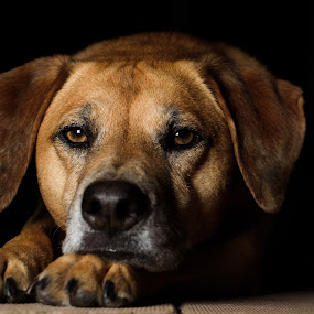 by Michael Last - Animals - Dogs Portraits (  )