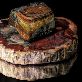 Tiger Eye on Petrified Wood by Dave Walters - Artistic Objects Other Objects ( macro, nature, fossils, still life, lumix fz2500 )