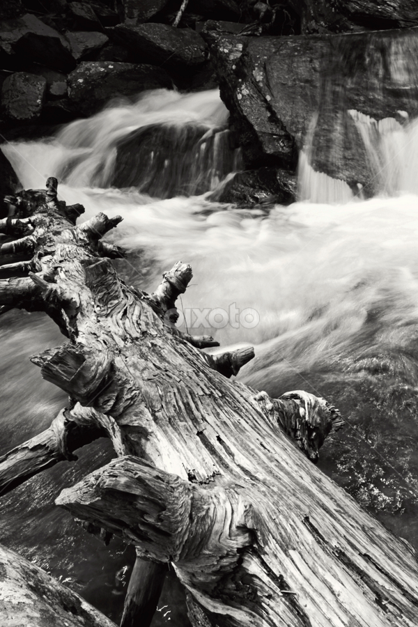 Flow by Gregory Cook - Landscapes Waterscapes ( water, nature, tree, black and white, waterfall, landscapes )
