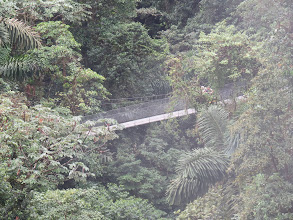 Photo: Suspension bridges enhance rain forest canopy  travel and views.