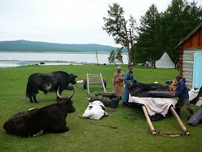 Photo: Költözködés Mongóliában