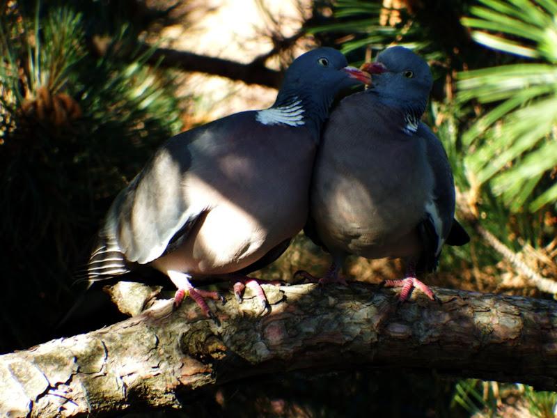Innamorati come due piccioncini di ellevi