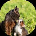 طرق تربية القطط icon