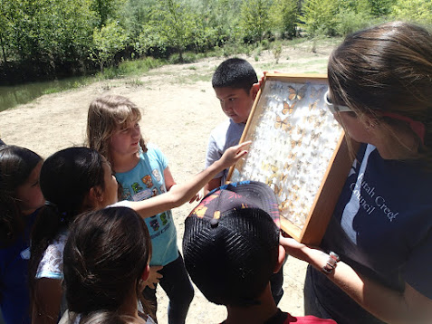 Students examine a case of preserved insects while on a field trip to Putah Creek.