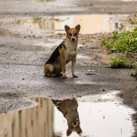 by Bianca Preda - Animals - Dogs Portraits