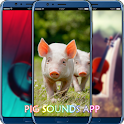 Pig Sounds App icon