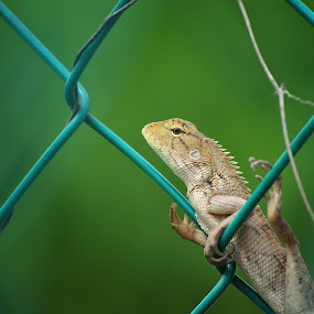 I See You by Darmal Ali - Animals Reptiles