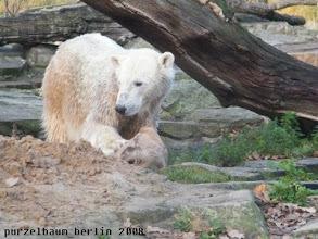 Photo: Knut hat einen Jutesack entdeckt :-)