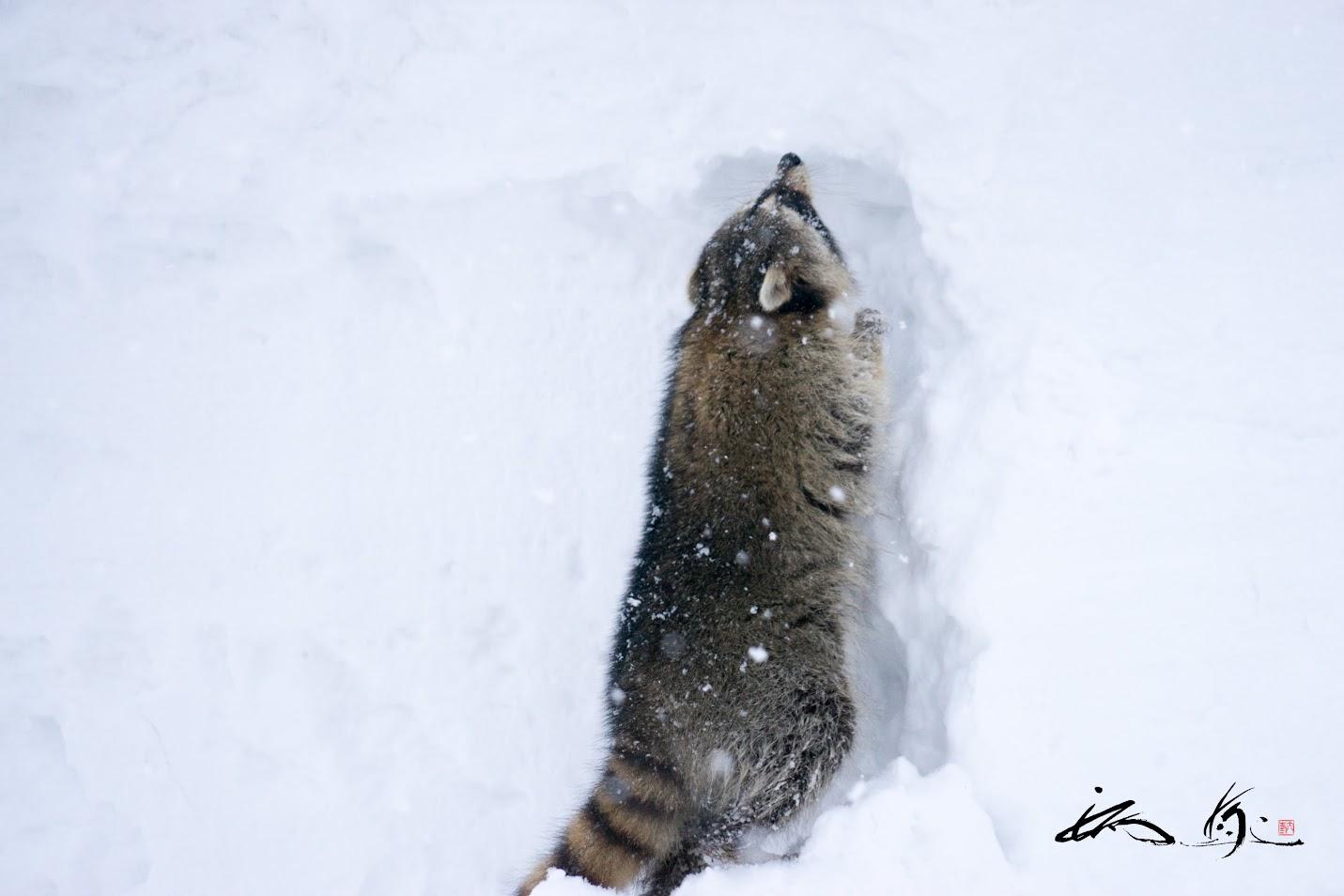 雪の壁を登ろうと