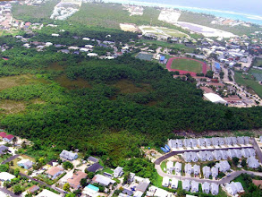 Photo: Ironwood Forest, Grand Cayman Photo: Lois Blumenthal, June 2007. University College of the Cayman Islands hall has white roof (mid-right). https://maps.google.com/maps?q=grand+cayman&hl=en&ll=19.280978,-81.381569&spn=0.006613,0.009602&hnear=Grand+Cayman&t=h&vpsrc=6&z=17