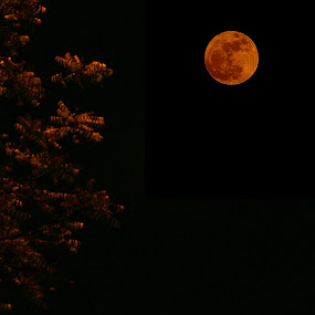 The Supermoon by Abhijit Chattopadhyay - Nature Up Close Other Natural Objects