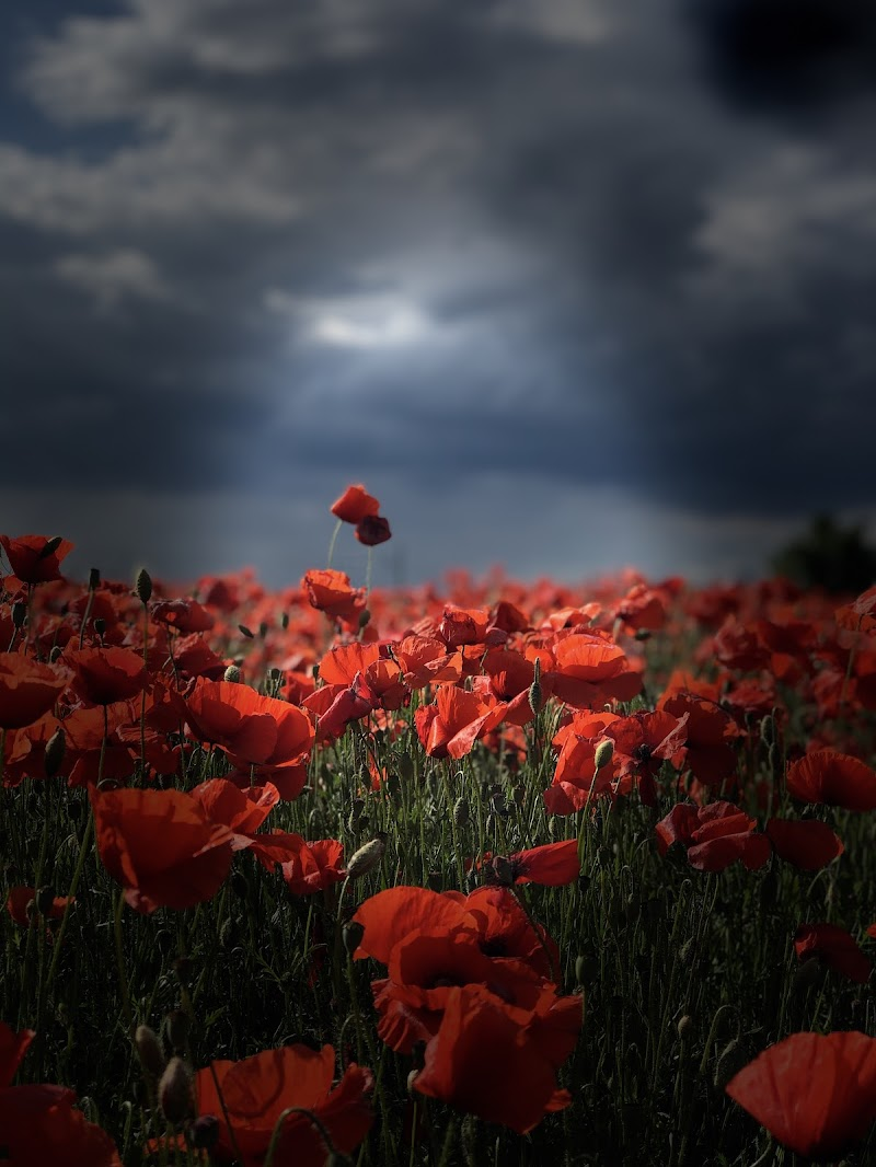 Field of love  di Camilla_f