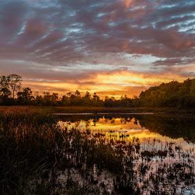 Dawn in Lillie Park by Greg Croasdill - Landscapes Sunsets & Sunrises ( reflection, sky, park, sunrise, light,  )