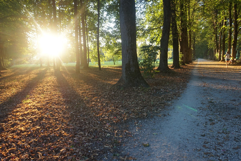 Sole tra gli alberi di patsie_1506