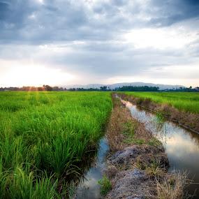 Lanscape of Paddy Field by Wei Seong Yan - Landscapes Prairies, Meadows & Fields