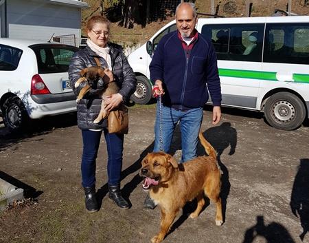 Câmara de Lamego incentiva adoção de cães abandonados