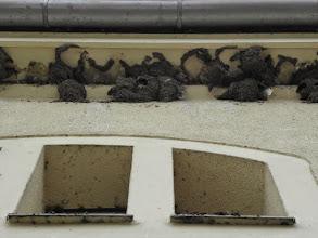 Photo: Pod dachem pompowni jaskółki budują gniazda bez lęku, że ktoś je stamtąd przepędzi. Tutaj ptaki mają swoje królestwo.