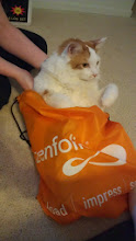 Photo: Cat's in the bag