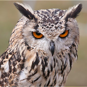 Looking at you kid by Andrew Richards - Animals Birds