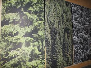 Photo: Vierteilige Fototapete im Eingangsbereich des Rathauses / Entwurf: Reinhard Feldrapp, Feldrapp-Media
