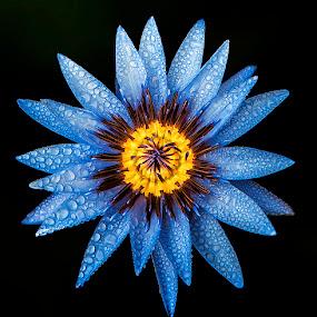 by Asher Jr Salvan - Nature Up Close Flowers - 2011-2013 ( watter lilies,  )