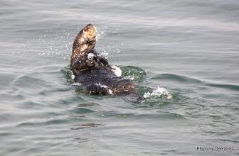 Photo: (Year 3) Day 20 - Otter Swimming #4