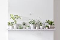 Nest Thermostat über Zimmerpflanzen