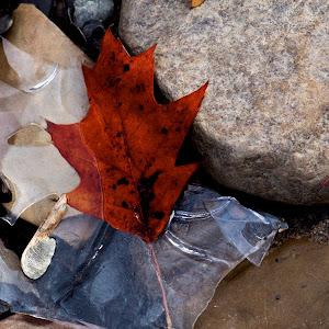 Icy Leaf.jpg