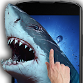Shark Attack - Magic Touch