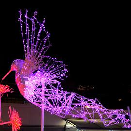 Brunswick's Pink Wings by DJ Cockburn - Public Holidays Christmas ( pink light, london, britain, shop, city, shopping centre, winter, holiday, retail, uk, brunswick centre, bird, design, cityscape, decoration, bloomsbury, england, electric light, illumination, festival, festive, mall, night, statue, arcade, christmas, flower, urban, hummingbird )