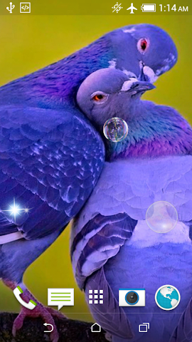 android Birds Jigsaw Puzzle + LWP Screenshot 4