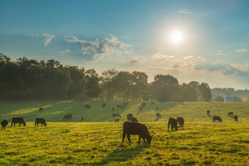 New climate calculator aims to help ranchers reduce emissions