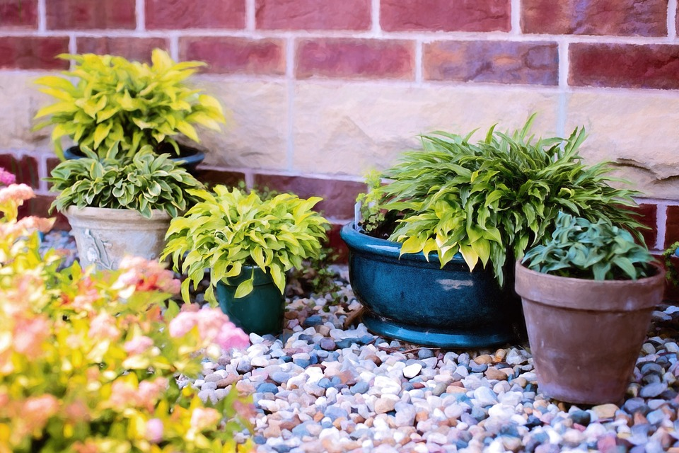 Plants In Pots, Summer, Green, Gardening, Nature
