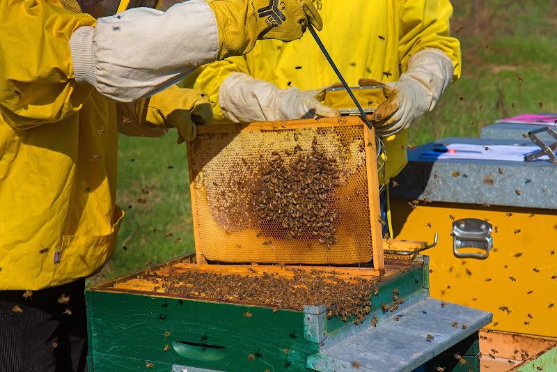 l'uomo e il mondo delle api di angart71