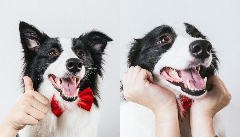 Tierfotografie Für Personalisierte Malen Nach Zahlen