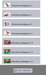 Train a Chihuahua screenshot 13
