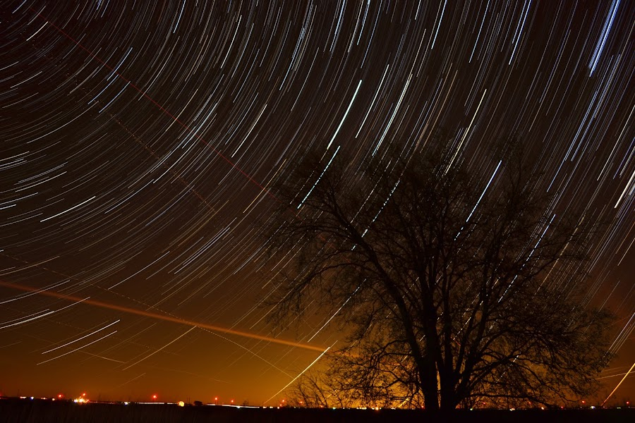 Star Trails by Ethan Scholl - Landscapes Starscapes ( exposure, tree, d3100, star, night, trails, nikon )