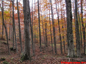 Photo: IMG_4129 i colori dell autunno sull appennino reggiano a Passo Forbici