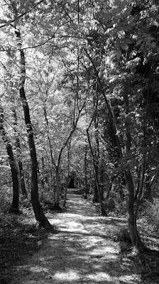 Natura e silenzio di alessiag2473