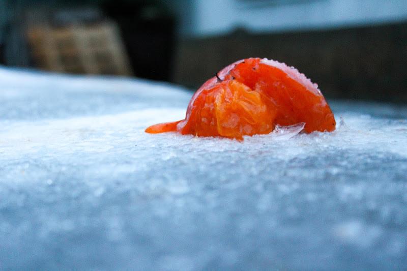 Frutto d'inverno di zarazaza