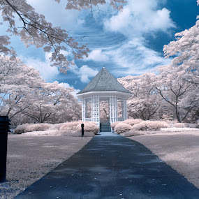 Ethereal Garden by Richard Amar - City,  Street & Park  City Parks ( clouds, ir, canon eos 20d, green, infrared, singapore, false color, canon ef17-40mm f/4lusm, tree, wide angle, foliage, ir modified camera, gazebo, kiosk, chinese garden )
