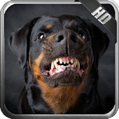 Rottweiler Pack 2 Wallpaper